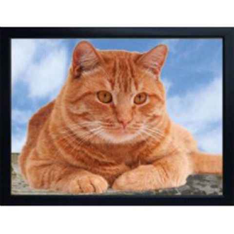 CAT (GINGER) 3D FRIDGE MAGNET